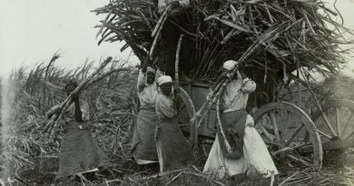 Native women working in the cane fields